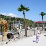 жирафы, страусы